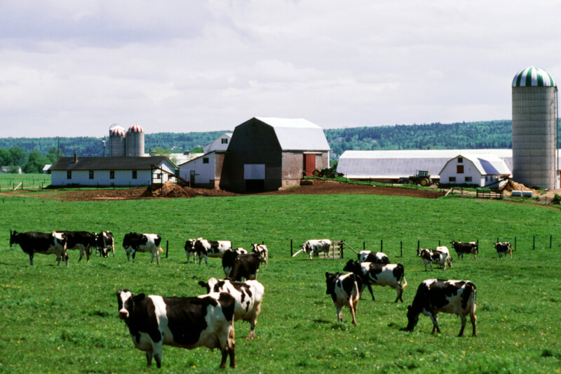 farming and rural projects